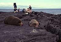 53 lions de mer retrouvés massacrés dans les îles Galápagos