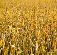 La région Ile-de-France favorise l'agriculture biologique et veut multiplier par trois les surfaces bio