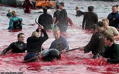 Massacre du dauphin Calderon
