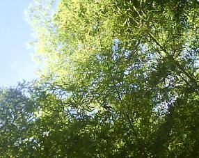 Biodiversité et plan d'action pour la forêt