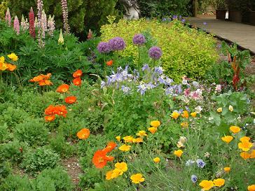Le jardin des martels plus de 2500 vari t s de plantes for Catalogue fleurs de jardin