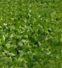 Conférence pour une culture responsable du soja au Brésil